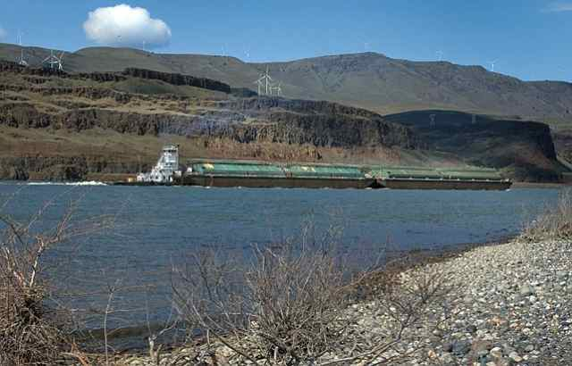 A tugboat pushes wheat barges up the Columbia River with wind turbines above the river bank.