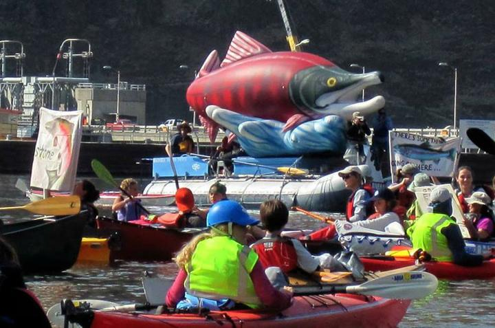 More than 160 boats and 300 advocates staged a peaceful protest between Wawawai Landing and Lower Granite Dam on Oct. 3, 2015, calling for breaching the lower four Snake River dams primarily for the benefit of endangered salmon and steelhead fisheries. (Photo by Bart Rayniak)